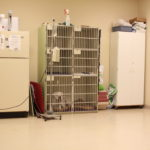 animal haven vet clinic